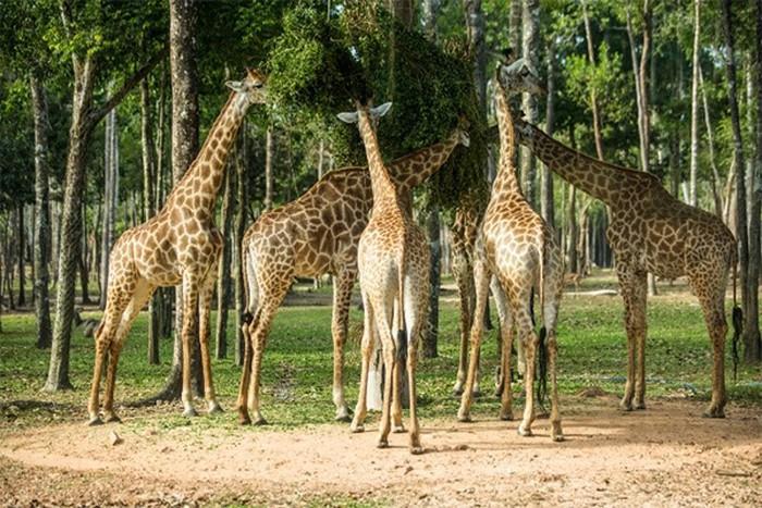 Rừng nguyên sinh xanh mát là nơi sinh sống của nhiều loài động vật kỳ thú